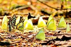 Papillons et amis Photographie stock