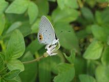 Papillons et feuilles Photo stock