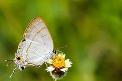 Papillons et fleurs. Image stock