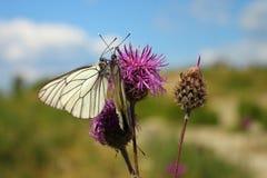 Papillons et fleurs Images stock