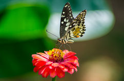 Papillons et fleurs photos libres de droits