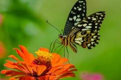 Papillons et fleurs Photos stock