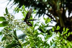Papillons et fleurs Image stock