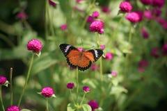 Papillons et fleurs Photo stock