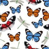 Papillons et libellules modèle sans couture, fond de vecteur Insectes multicolores lumineux sur un contexte blanc Pour le desig d Photos stock