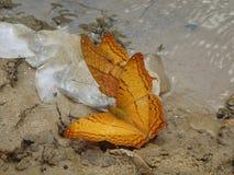 Papillons jaunes avec les échelles de poissons sur le sable Images stock