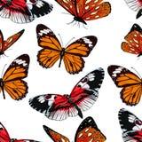 Papillons modèle sans couture, fond de vecteur Insectes multicolores lumineux sur un contexte blanc Pour la conception de tissu,  Images libres de droits