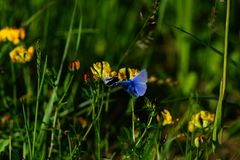 Papillons parmi des fleurs et des herbes, des champs et des prés images stock