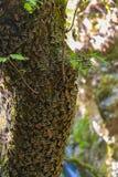 Papillons sur des arbres dans une vallée sur Rhodes photo libre de droits