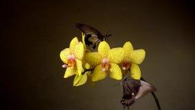 Papillons sur une fleur banque de vidéos