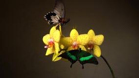 Papillons sur une fleur clips vidéos