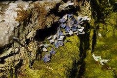 papillons ?t? La beaut? naturelle de la Russie photo stock