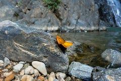 Papillons tenant dessus la roche avec le fond de cascade Photos libres de droits