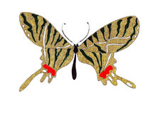 Papillons tirés par la main d'illustration de différents modèles Image libre de droits