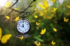 Papillons volant autour d'une montre de poche antique pendant d'une branche d'arbre images stock