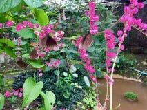 Papillons volant en fleurs images stock