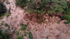 Papio del Papio de los babuinos de Guinea almacen de video