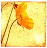 Papoila amarela Foto de Stock Royalty Free