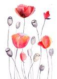A papoila estilizado floresce a ilustração Foto de Stock