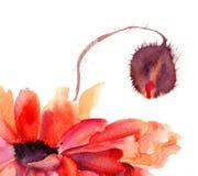 A papoila estilizado floresce a ilustração Fotos de Stock Royalty Free