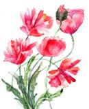 A papoila estilizado floresce a ilustração Imagem de Stock