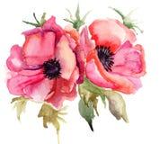 A papoila estilizado floresce a ilustração Imagens de Stock Royalty Free