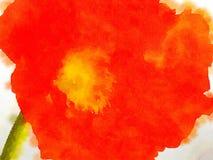 A papoila vermelha agradável Imagens de Stock Royalty Free
