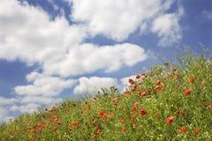 Papoila vermelha e o céu Fotografia de Stock Royalty Free