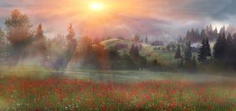 Papoilas alpinas nos Carpathians Foto de Stock
