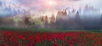 Papoilas alpinas nos Carpathians Fotos de Stock Royalty Free
