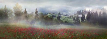 Papoilas alpinas nos Carpathians Imagem de Stock