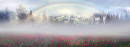 Papoilas alpinas nos Carpathians Imagem de Stock Royalty Free