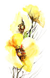 Papoilas amarelas Imagem de Stock Royalty Free