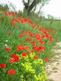 Papoilas ao longo da estrada e do campo de exploração agrícola Fotografia de Stock Royalty Free