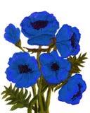 Papoilas azuis Imagens de Stock Royalty Free