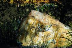 Papoilas azuis tiradas mão na rocha resistida Fotografia de Stock Royalty Free