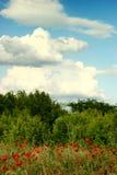 Papoilas de campo da paisagem do verão e céu azul Foto de Stock