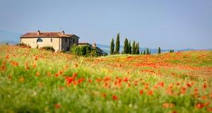 Papoilas do vermelho de Tuscan Fotos de Stock