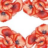 Papoilas do vermelho do quadro Isolado Ilustração da aguarela Foto de Stock