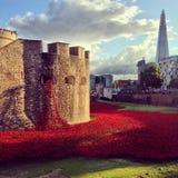 Papoilas na torre de Londres Imagem de Stock