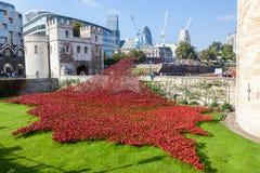 Papoilas na torre de Londres Imagens de Stock