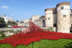 Papoilas na torre de Londres Foto de Stock