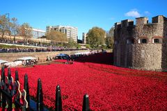 Papoilas na torre de Londres Fotos de Stock