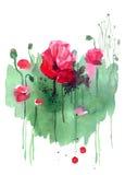 Papoilas tiradas mão da aquarela no fundo verde Birthd floral Imagem de Stock Royalty Free