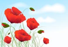 Papoilas vermelhas ilustração royalty free