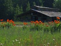 Papoilas vermelhas e edifício velho Imagem de Stock Royalty Free