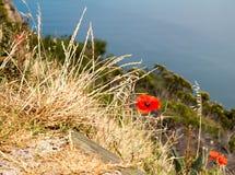 Papoilas vermelhas nos wildgrass Imagem de Stock Royalty Free