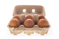 Pappäggask med sex isolerade bruna ägg Royaltyfri Fotografi