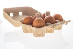 Pappäggask med sex isolerade bruna ägg Arkivbild