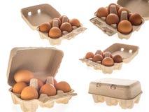 Pappäggask med sex isolerade bruna ägg Fotografering för Bildbyråer